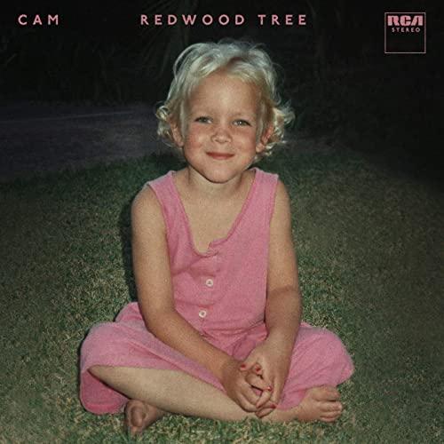 CAM-redwood-tree-friendlymusic